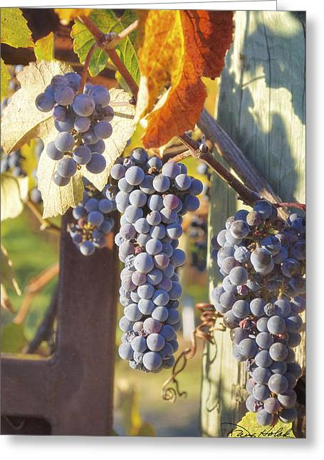 Calistoga Greeting Cards - Forgotten Harvest Greeting Card by Doug Holck