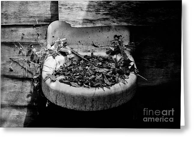 Large Format Greeting Cards - Forgotten Sink 2 Greeting Card by Patrick M Lynch