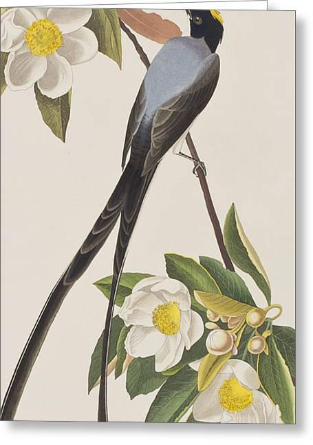 Flycatcher Greeting Cards - Fork-tailed Flycatcher  Greeting Card by John James Audubon
