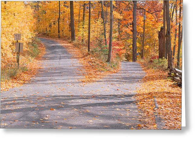 Fall Colors Greeting Cards - Forked Road In A Forest, Vermont, Usa Greeting Card by Panoramic Images