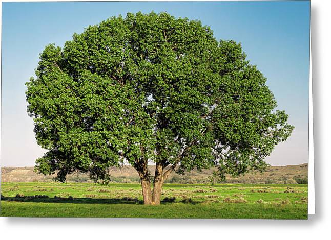 Fort Keough Tree Greeting Card by Todd Klassy