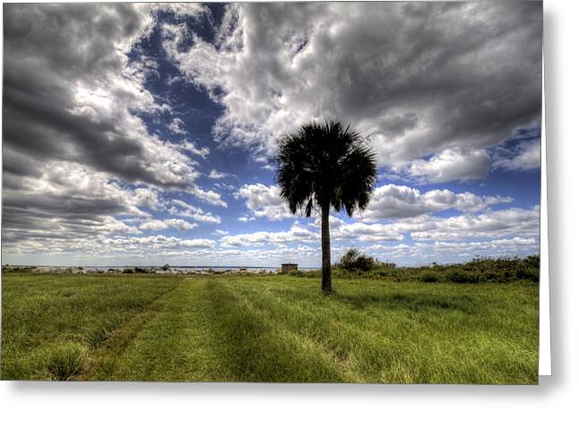 Palm Tree Greeting Cards Greeting Cards - Fort Moultrie Palm  Greeting Card by Dustin K Ryan
