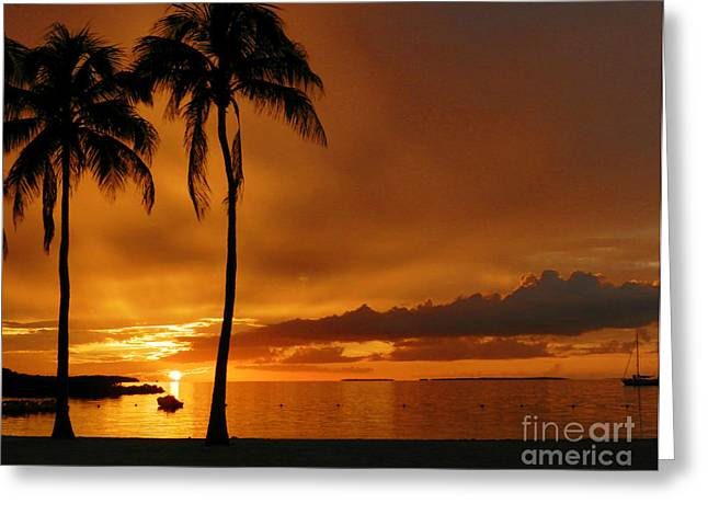 Founders Tree Greeting Cards - FoundersBeach Sunset Greeting Card by Tammy Chesney