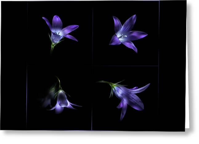 Four Bluebell Flowers - Light Painting Greeting Card by Alexey Kljatov