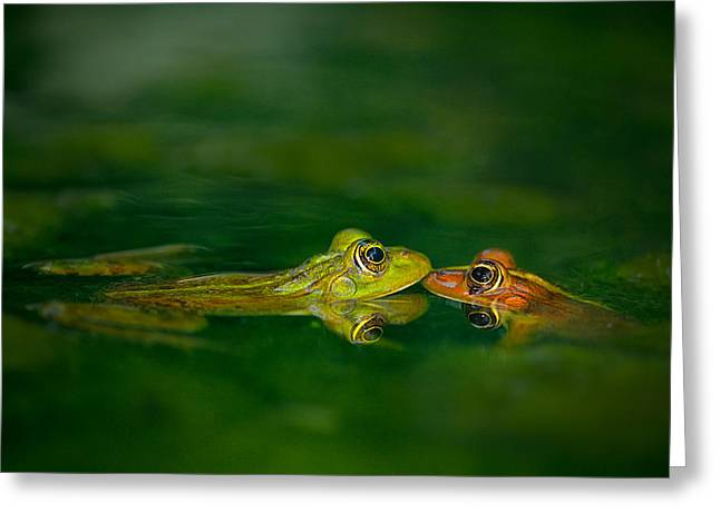 Frogs Photographs Greeting Cards - Four Eye Meeting Greeting Card by Tomer Yaffe