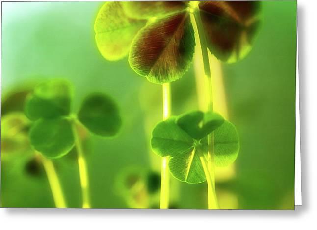 Soft Petals Greeting Cards - Four Leaf Clover Greeting Card by Bonnie Bruno