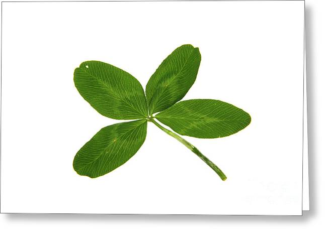 Good Luck Photographs Greeting Cards - Four Leaf Clover Greeting Card by Photo Researchers
