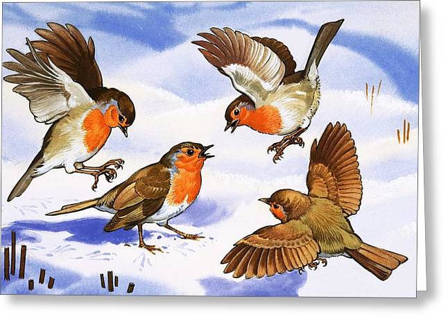 Robin Greeting Cards - Four robins in the snow Greeting Card by English School