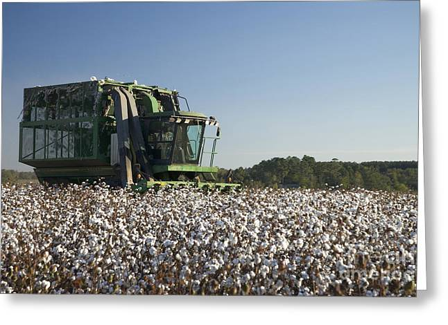 Cotton Pickers Greeting Cards - Four Row Picker Harvesting Cotton Greeting Card by Inga Spence
