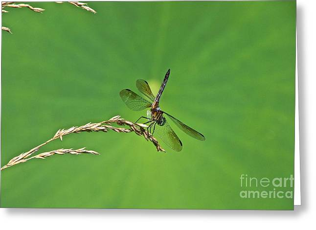 Mosquito Eater Greeting Cards - Four-Winged Interceptor Greeting Card by Byron Varvarigos