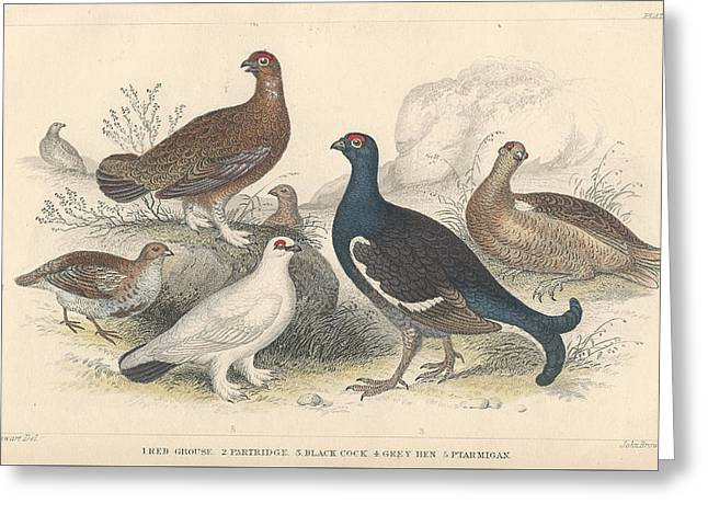 Animate Greeting Cards - Fowl Greeting Card by Oliver Goldsmith