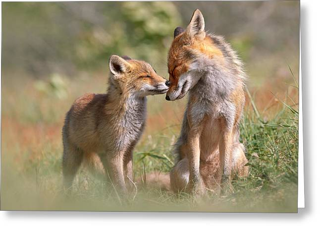 Fox Felicity II - Mother And Fox Kit Showing Love And Affection Greeting Card by Roeselien Raimond