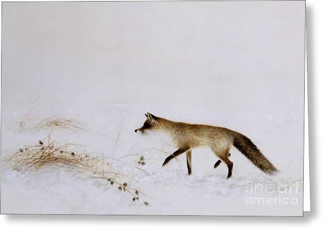 Fox Greeting Cards - Fox in Snow Greeting Card by Jane Neville