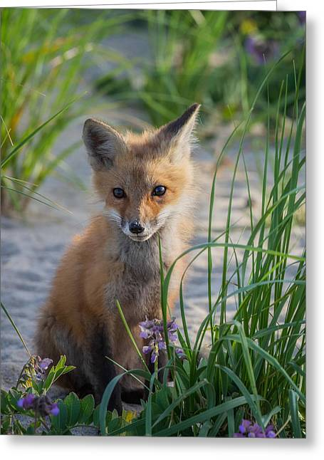 Fox Kit Greeting Card by Bill Wakeley