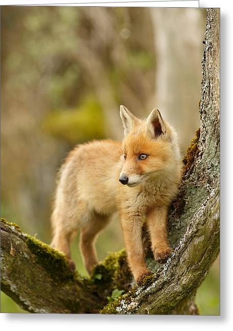 Fox Kit In A Tree Greeting Card by Roeselien Raimond
