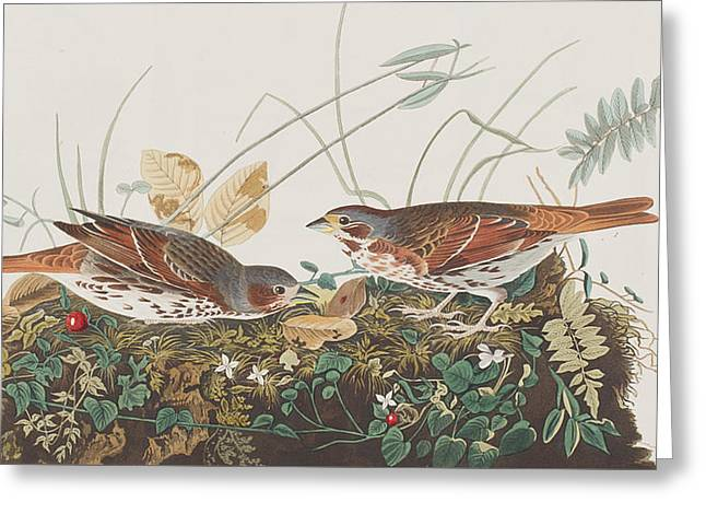 Pairs Greeting Cards - Fox Sparrow Greeting Card by John James Audubon