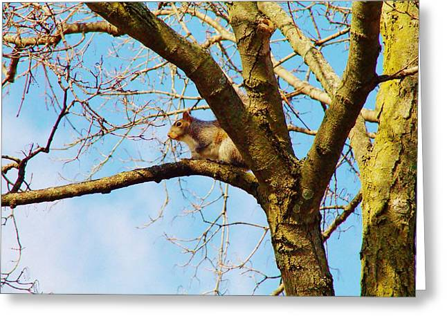 Fox Squirrel Greeting Cards - Fox Squirrel Greeting Card by Kathy Hulbert