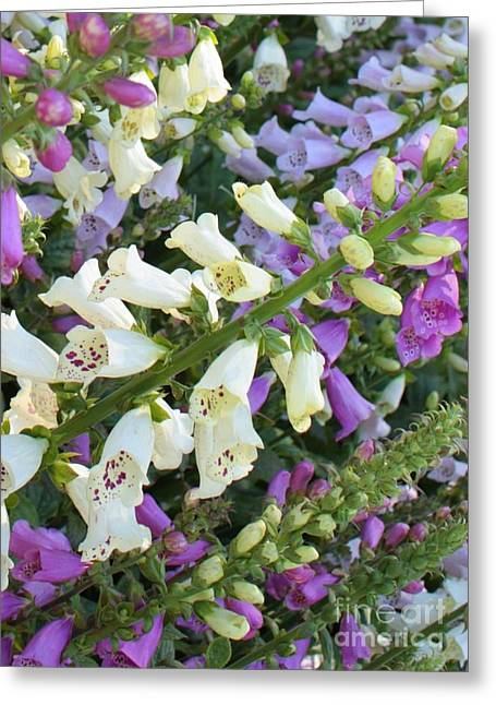 Foxglove Fancy Greeting Card by Carol Groenen