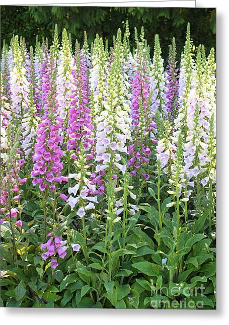 Foxglove Garden - Vertical Greeting Card by Carol Groenen