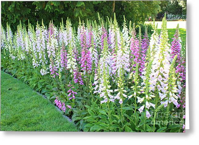 Foxglove Flowers Photographs Greeting Cards - Foxglove Garden Greeting Card by Carol Groenen