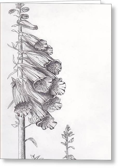 Foxglove Flowers Drawings Greeting Cards - Foxglove Greeting Card by Janel Bragg