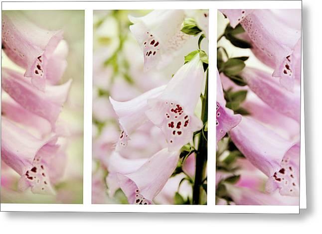 Foxglove Flowers Greeting Cards - Foxglove Triptych Greeting Card by Jessica Jenney