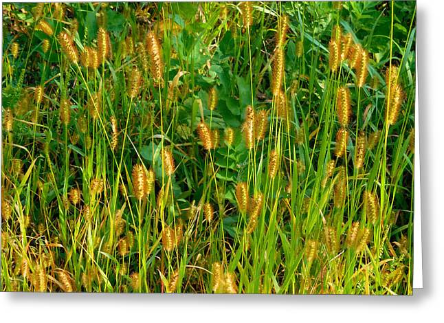 Herby Greeting Cards - Foxtail Grass 2 Greeting Card by Lanjee Chee