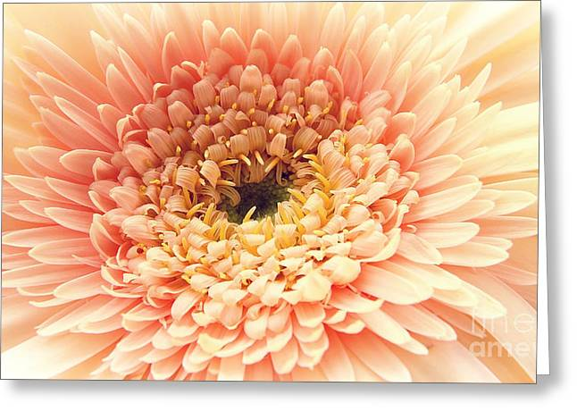 Flower Design Greeting Cards - Fragile beauty Greeting Card by SK Pfphotography
