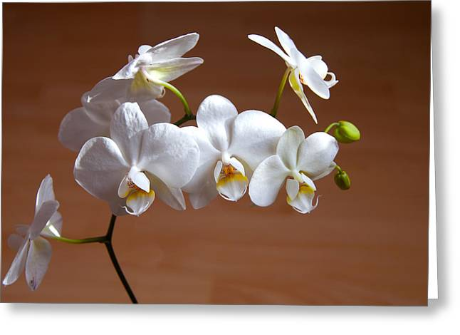 Fragile Orchid  Greeting Card by Svetlana Sewell