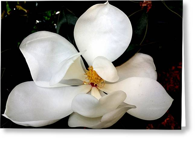 Blossoming Tapestries - Textiles Greeting Cards - Fragrant Magnolia Greeting Card by Suzi Freeman