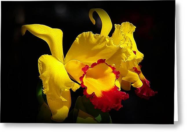 Cattleya Greeting Cards - Fragrant Sunshine Greeting Card by Blair Wainman