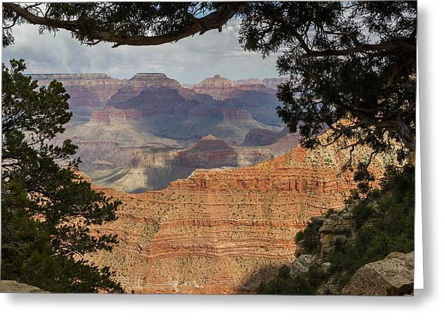 Within A Tree Greeting Cards - Framed Canyon Greeting Card by Penny Meyers