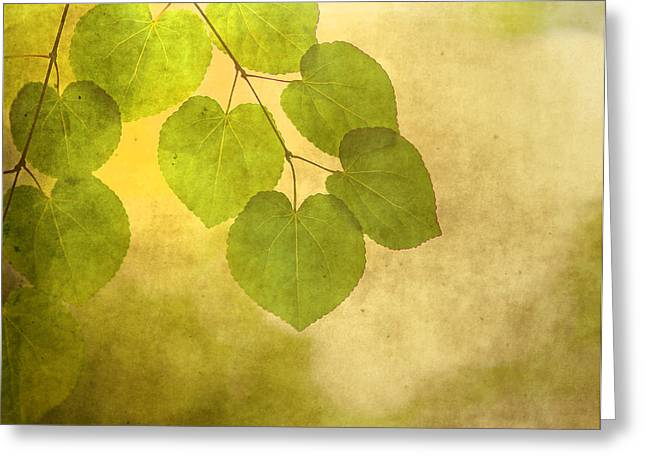Golden Glow Greeting Cards - Framed in Light Greeting Card by Rebecca Cozart