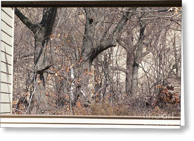Framing Tangled Dunescape Greeting Card by Ann Horn