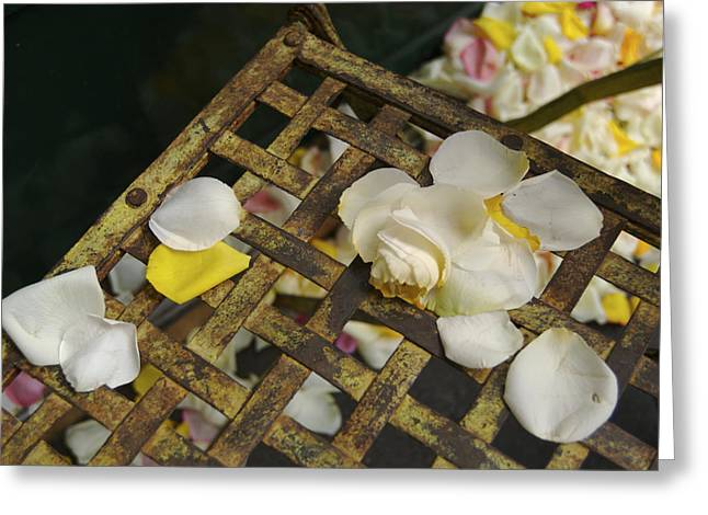 Large White Flower Close Up Greeting Cards - France Flower Petals, Rose, Still-life Greeting Card by Keenpress