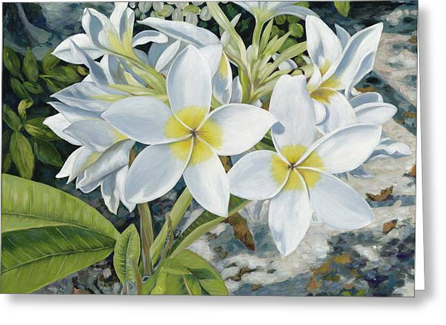 Frangipani Greeting Cards - Frangipani Greeting Card by Danielle  Perry