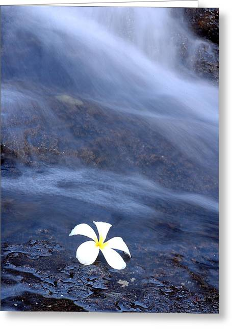 Tradional Greeting Cards - Frangipani flower and waterfall Greeting Card by MAK Imaging