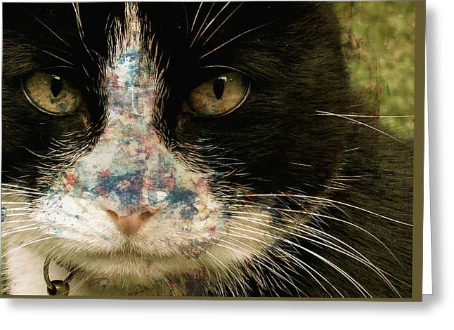 Domestic Cat Greeting Cards - Frankie Greeting Card by Paul Lovering