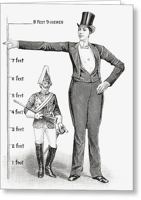Height Drawings Greeting Cards - Franz Winkelmeier, Aka Giant Of Greeting Card by Ken Welsh