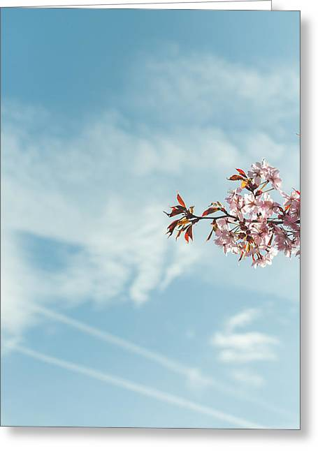 March Greeting Cards - Free Greeting Card by Marcus Karlsson Sall