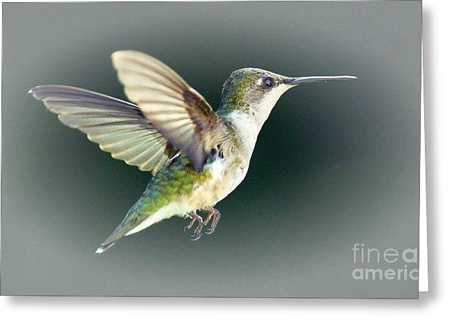 Hovering Greeting Cards - Free Spirit Greeting Card by Arnie Goldstein