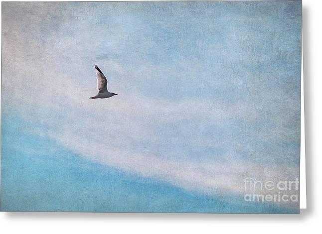 White Birds Greeting Cards - Freedom Greeting Card by Angela Doelling AD DESIGN Photo and PhotoArt