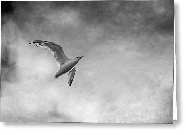 Livingstone Greeting Cards - Freedom in Black and White Greeting Card by Maggie Terlecki