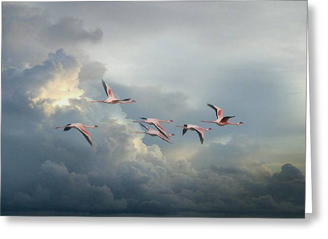 Lessor Greeting Cards - Freedom in Flight Greeting Card by Joseph G Holland