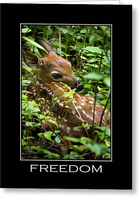 Thought Wild Greeting Cards - Freedom Inspirational Motivational Poster Art Greeting Card by Christina Rollo