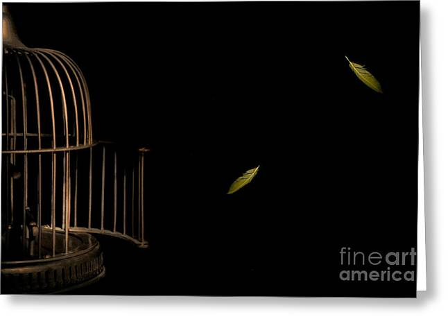 Forgiveness Photographs Greeting Cards - Freedom Greeting Card by Jan Piller