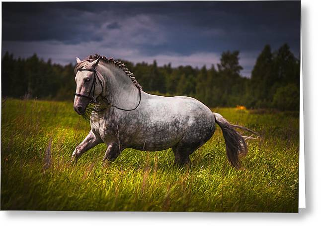 Horse Breed Greeting Cards - Freedom Greeting Card by Jenny Rainbow