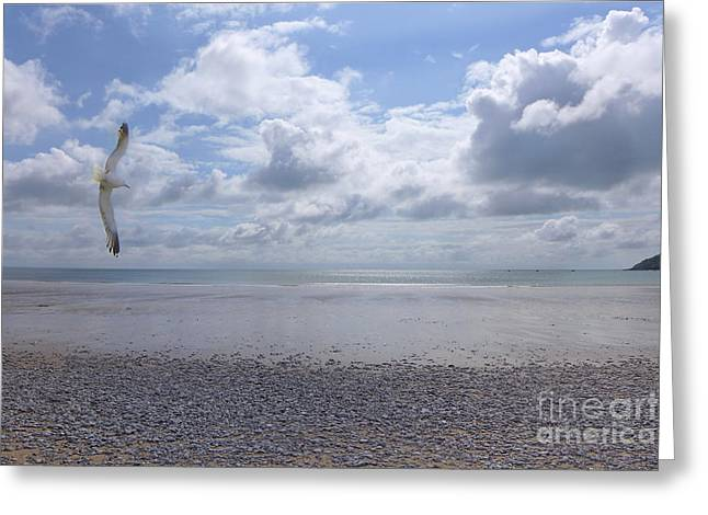 Flying Seagull Greeting Cards - Freedom - Seagull on Empty Beach Greeting Card by Alison Burford