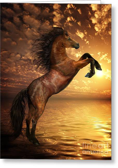 Horses Art Print Greeting Cards - Freedom Greeting Card by Shanina Conway