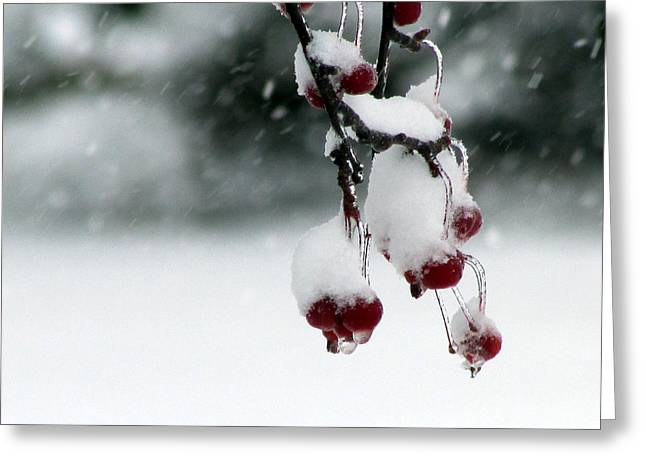 Berry Greeting Cards - Freeze Frame Greeting Card by Joni Moseng